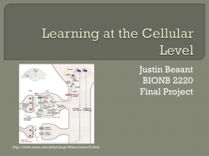 Learning at the Cellular Level