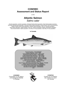 Atlantic Salmon Salmo salar