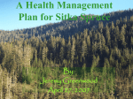 A Health Management Plan for Sitka Spruce By: Jeremy Greenwood
