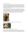 Myths and truths about camels. A camel is an even