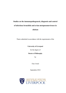 Studies on the immunopathogenesis, diagnosis and control of