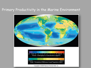 Chapter 13: Biological productivity and energy