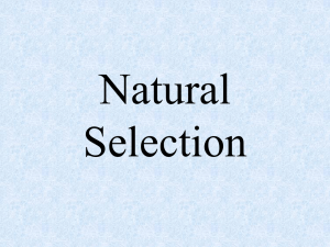 Genetic Variation is the Key to Natural Selection