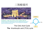 The citric acid cycle is the