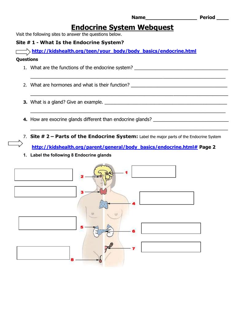 Endocrine System Webquest - Biology with Mrs. Jennings