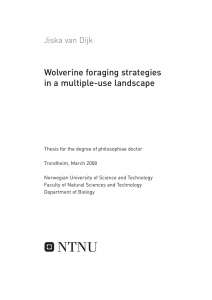 Wolverine foraging strategies in a multiple-use landscape