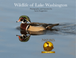 Wildlife of Lake Washington