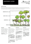 Rainforest Kit rainforest layers stage 3 information sheet