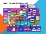 simple basic metabolism