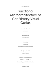 Functional Microarchitecture of Cat Primary Visual Cortex