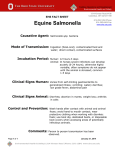 Equine Salmonella Fact Sheet - OSU Environmental Health and Safety