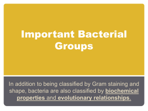 Important Bacterial Groups
