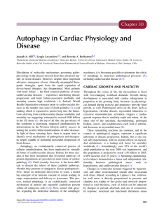 Chapter 30. Autophagy in Cardiac Physiology and Disease