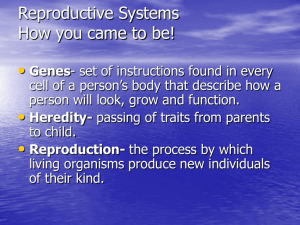 reproductive_systems_endocrine_system.pps