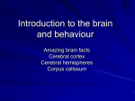 Introduction to the brain and behaviour