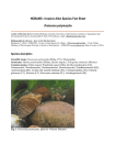 Invasive Alien Species Fact Sheet – Dreissena polymorpha