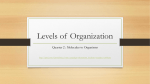 Levels of Organization - Bremen High School District 228
