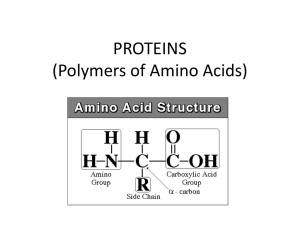 PROTEINS (Polymers of Amino Acids)