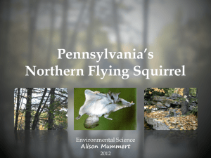 Pennsylvania`s Northern Flying Squirrel