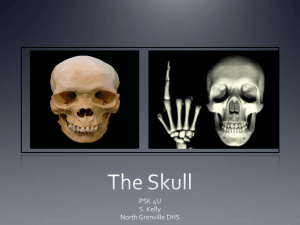 The Skull - WordPress.com