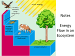 Unit 6 Ecology Part 2 * Energy Flow