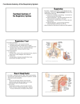 Functional Anatomy of the Respiratory System Respiration