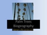 Palms (Family Arecaceae)