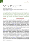 Mechanisms of Neuronal Computation in Mammalian Visual Cortex