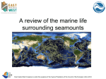 A review of the marine life surrounding seamounts