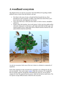 A woodland ecosystem - Forest of Avon Trust