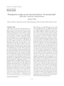 Phylogenetic studies on the bacterial phylum`Verrucomicrobia`
