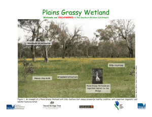 Plains Grassy Wetland
