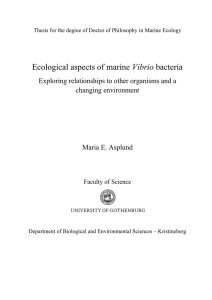 Ecological aspects of marine Vibrio bacteria