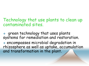 What is Phytoremediation?