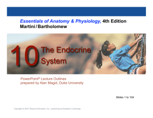 The Endocrine System - Marlington Local Schools