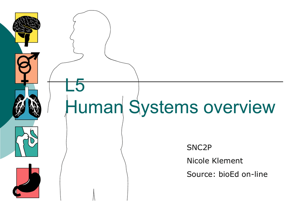 5 SNC2P human org systems overview - Nicole