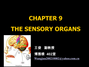 (一)Functional Anatomy of the Retina