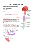 Unit 13 Student Guided Notes Divisions of the Nervous System and