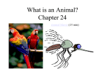 What is an Animal? Chapter 25