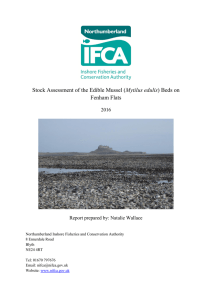 Stock Assessment of the Edible Mussel (Mytilus edulis) Beds on