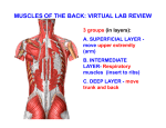 muscles of the back: virtual lab review