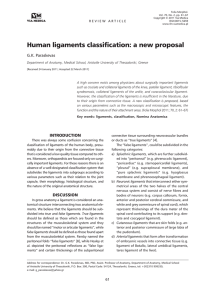 Human ligaments classification: a new proposal