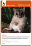 Northern quoll - WWF