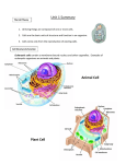 Unit 1 Summary Animal Cell Plant Cell