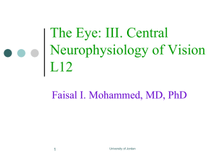 The Eye: III. Central Neurophysiology of Vision