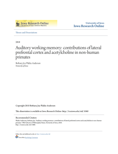 Auditory working memory: contributions of lateral prefrontal cortex