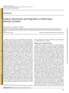 Catalytic Mechanism and Regulation of Mammalian Adenylyl Cyclases
