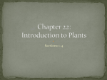 Chapter 22: Introduction to Plants