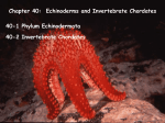 Chapter 40-Echinoderms and Invertebrate Chordates