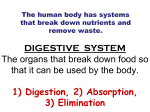 DIGESTIVE SYSTEM The organs that break down food so that it can